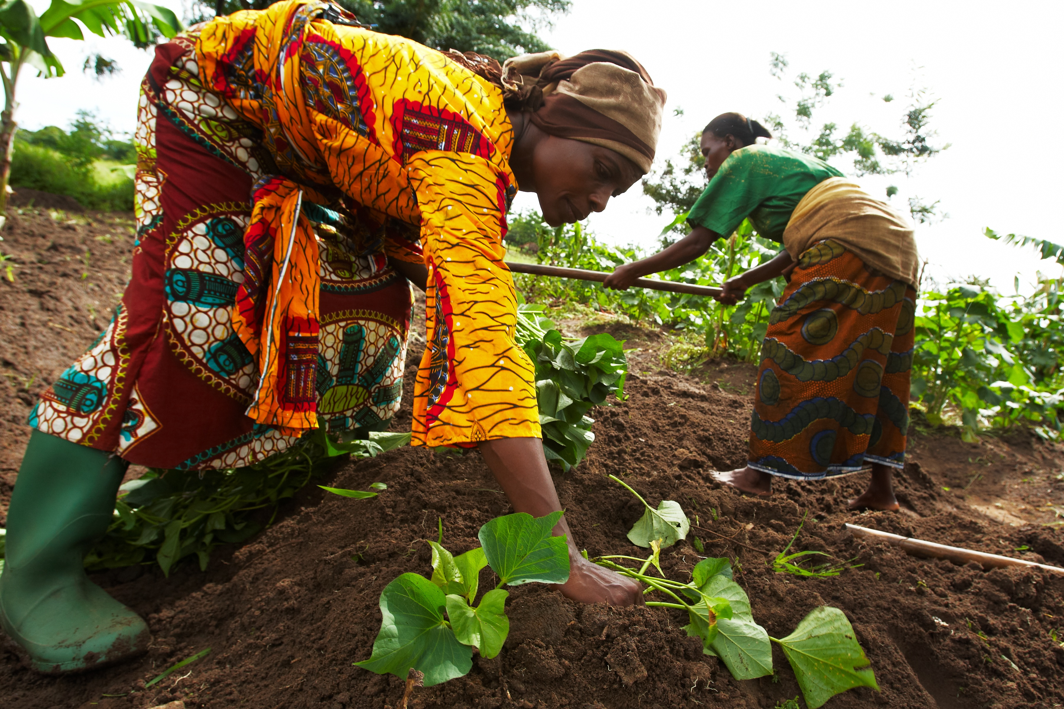 Women farmers growing sweet potatoes in Tanzania. Photo: ONE